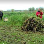 santackergaard_20-11-2017 bijenvolkje